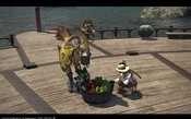Final Fantasy XIV: A Realm Reborn - CHocobo training: Eat them veggies!