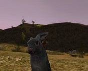 Lord of the Rings Online - A rabbit